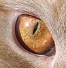 Samson's orange eye
