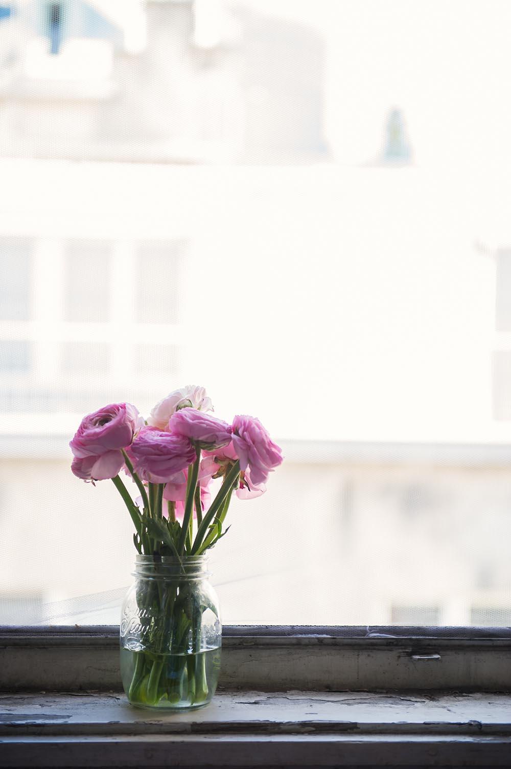ranunkeln, ranunculus, buttercups, pink, flowers, spring, window