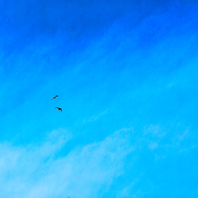 Red Kites no 3 by Brian Southam