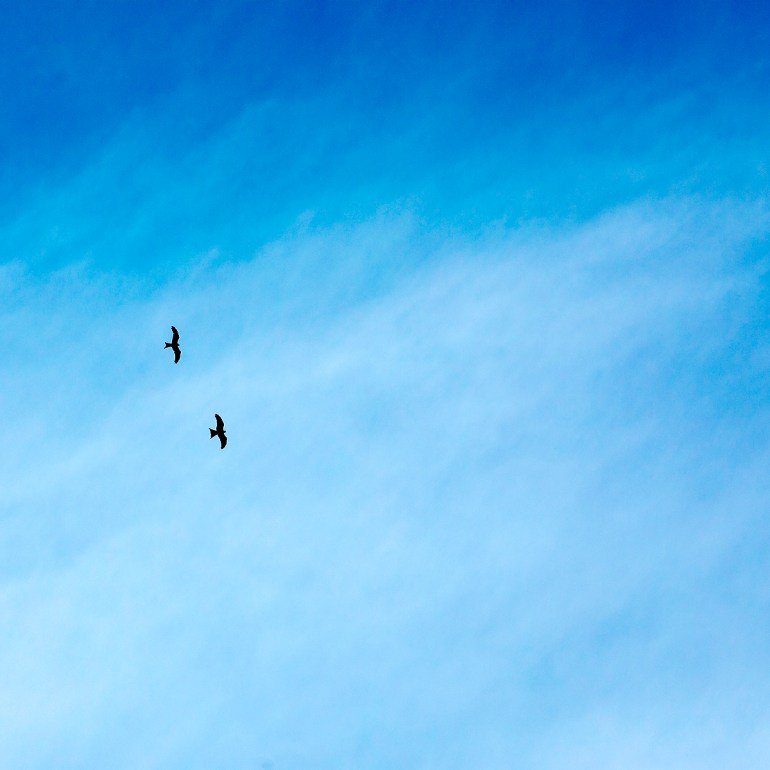 Red Kites no 1 by Brian Southam