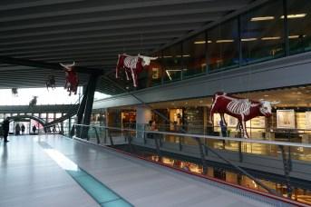 Unusual cows