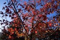 Autumn31