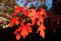 Autumn35