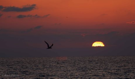 Florida - Delray Beach - A Flyby during Sunrise