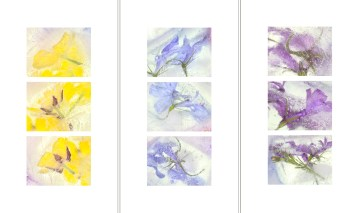 Sunshine Unveiled, Blue Ices, Ice Follies · 2014 · 12 x 22 in. each