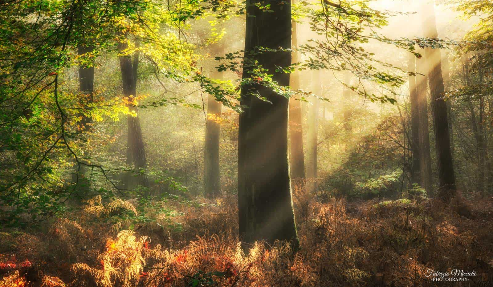 Standing in the center of the frame  – forest and nature photography