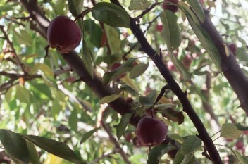 Film-Apples