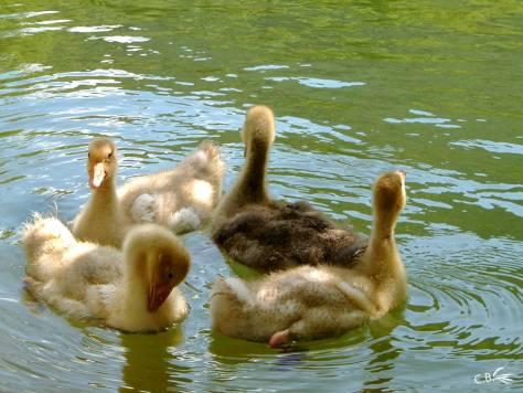 4 oisons tournant en rond en se nettoyant