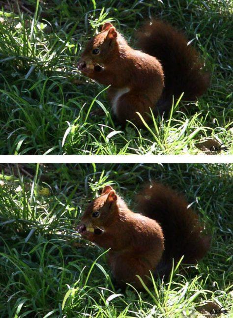 Jeu des 7 différences sur l'écureuil