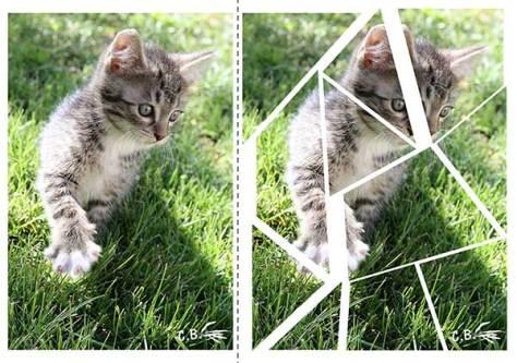vignette-puzzle-chaton