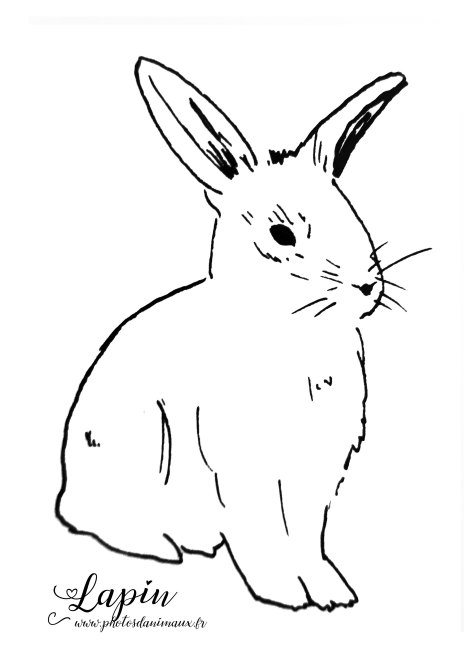 coloriage, lapin