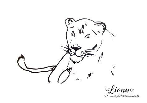 coloriage, lionne