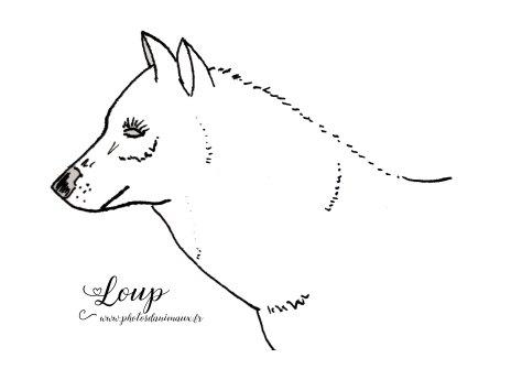 coloriage, loup