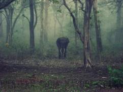 elefanteagenciadeviajes