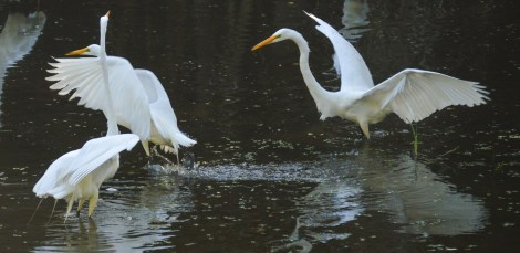 ff egret fight