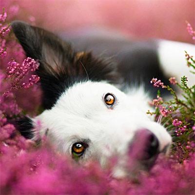 Красивое фото на аватар - Собака в цветах - Аватарки с ...