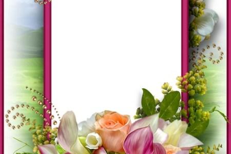 flower frame images » Best Poppy Flower | Poppy Flower