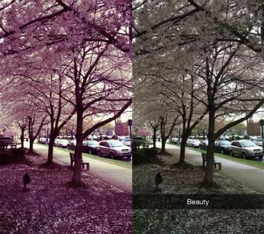 final blossom