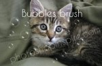 Bubbles Photoshop brush – Freebie