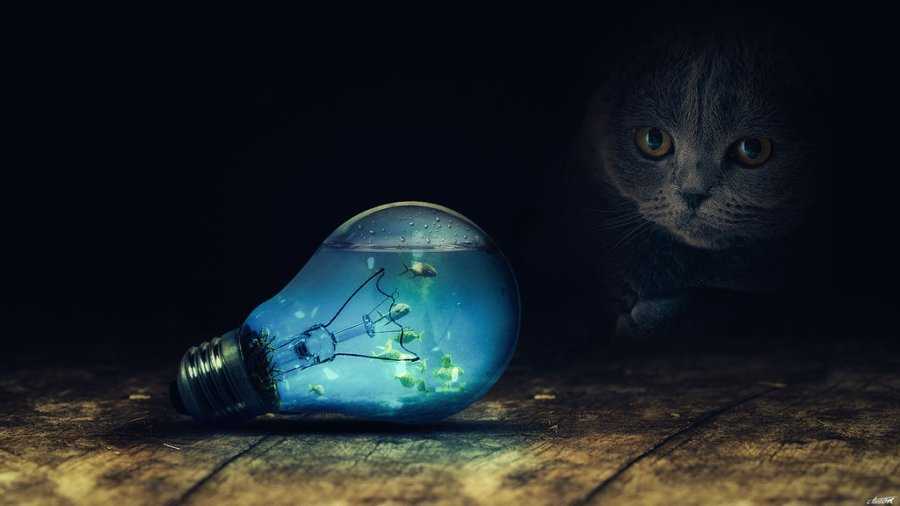 bulb cat dark fish water