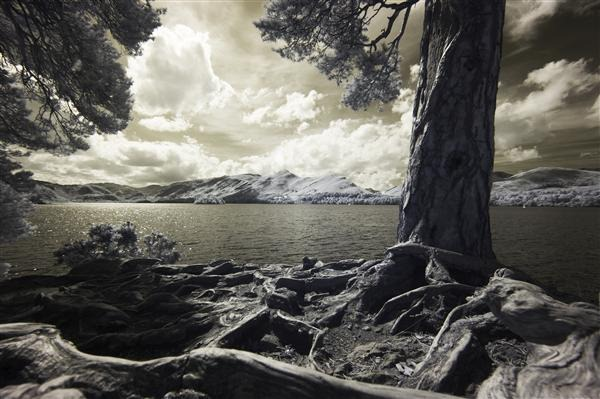 Dramatic Lighting Trees Derwent Water in Keswick