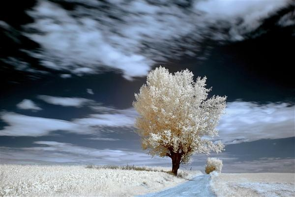Tree in Infrared, Landscape with Tree