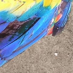 Closeup of parrots wings