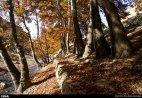 Hamedan, Iran - Autumn in Hamedan 01