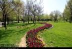 Razavi Khorasan, Iran - Mashhad, Bulbous Flowers Festival 07