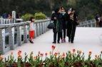 Tehran, Iran - Tabiat pedestrian bridge 07