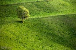 East Azerbaijan, Iran - Kaleybar in spring 9