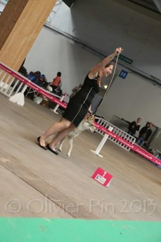 Championnats 2013 00002