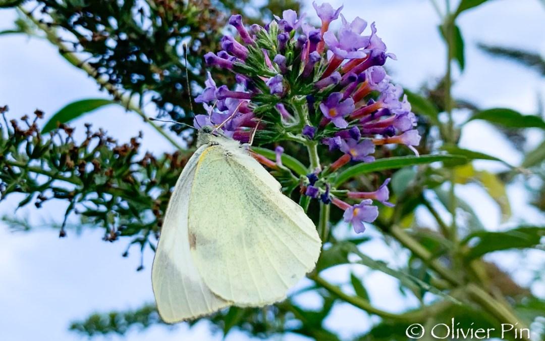 Ciel de papillon…