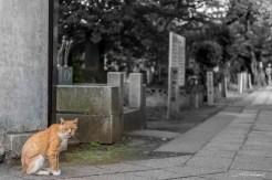 Le chat du cimetière - Tokyo - Japon.