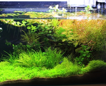 mr. aqua 17.4 planted tank
