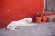 2013_04_April_Mexico_0209
