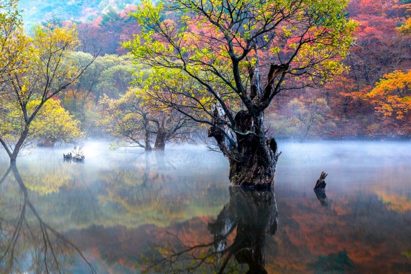 A Wet Fog By Youngkun Park