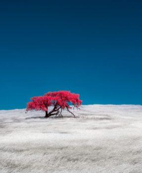 California Foothill, David Nilsen
