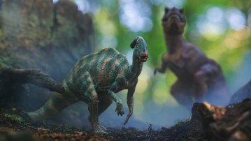 Parasorolophus