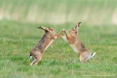 © Philipp Marazzi - Hip Hop. Brown Hares