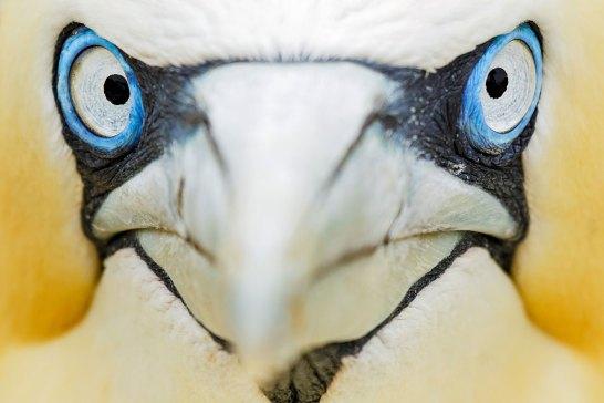 ©Mario SUAREZ PORAS (Espagne) - Oiseaux sauvages de pleine nature