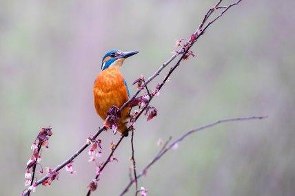 ©Gauthier POIRET - PRIX Oiseaux sauvages de pleine nature