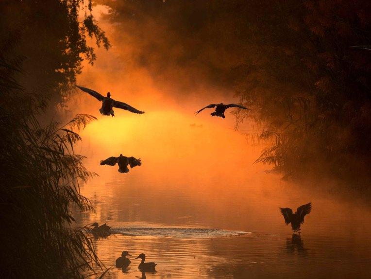 ©Laurent EMMENEGGER (Suisse) - PRIX Oiseaux sauvages de pleine nature