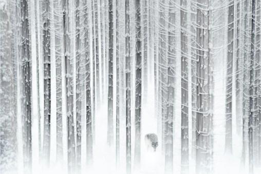 Prix du photographe régional – © Pierre Colin
