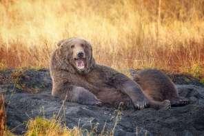 Comedy Wildlife - Wenona Suydam - Draw Me Like One Of Your French Bears