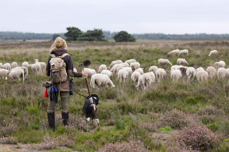 Workshop dwalen met de kudde