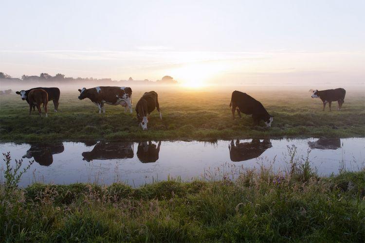 Storytelling met fotografie: zonsopgang in de mist