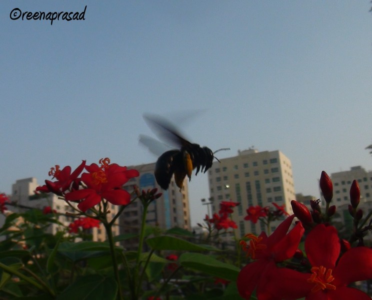 The happy bumble bee