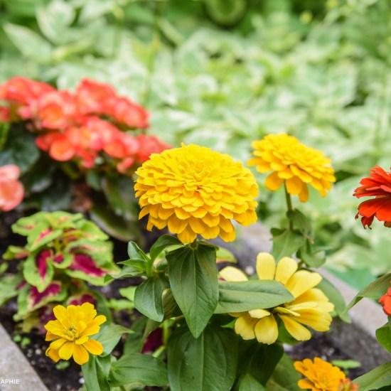 Fleurs Rue Demers