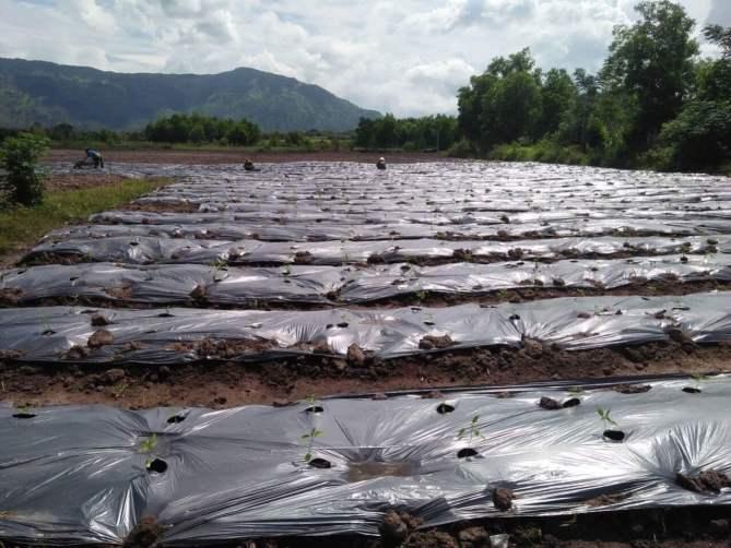 Cung cấp ớt sạch xuất khẩu